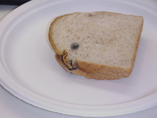 Pâine cu mucegai, Foto: imgkid.com