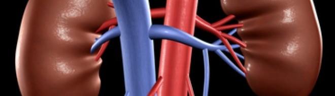 Tromboza venelor renale produce dureri de spate, Foto: wikifamily.ru