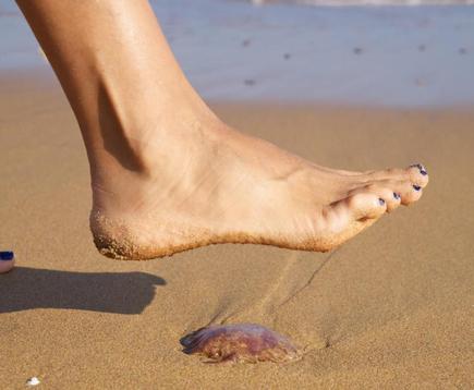 Meduza pe nisipul umed, Foto: imgbuddy.com