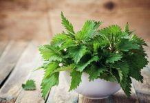 Urzica, plantă medicinală, beneficii și întrebuințări