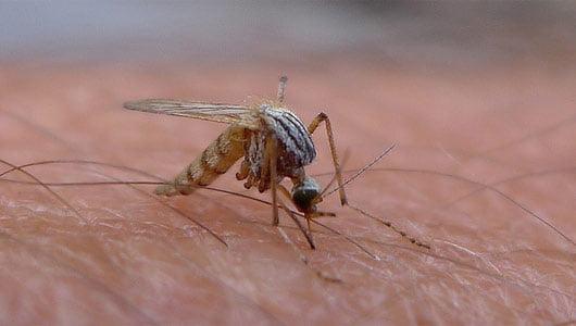 Înțepătura de țânțar produce înroșirea pielii și mâncărime, Foto: mosquitorepellentreviews.com