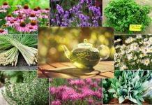 1-ceai-din-plante-medicinale
