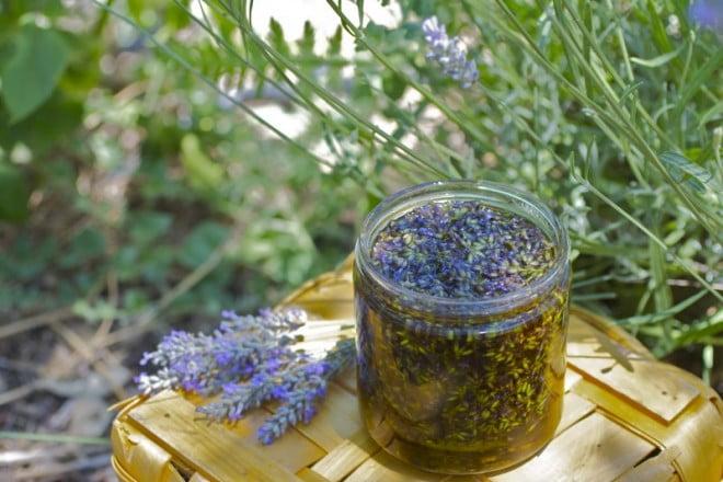 Infuzia de levănțică, Foto: aromatherapie-info.com