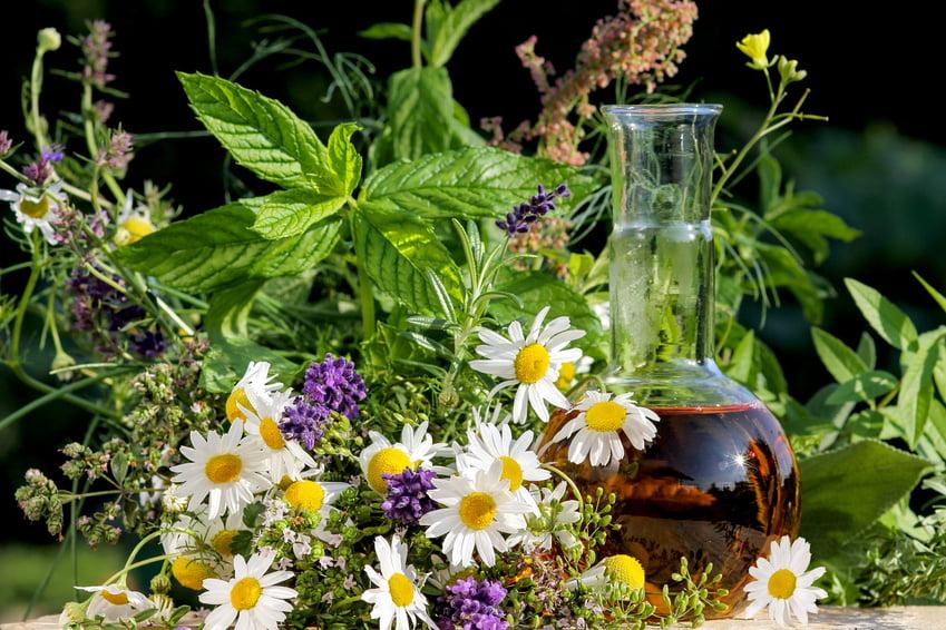 4-tincturi-din-plante-medicinale