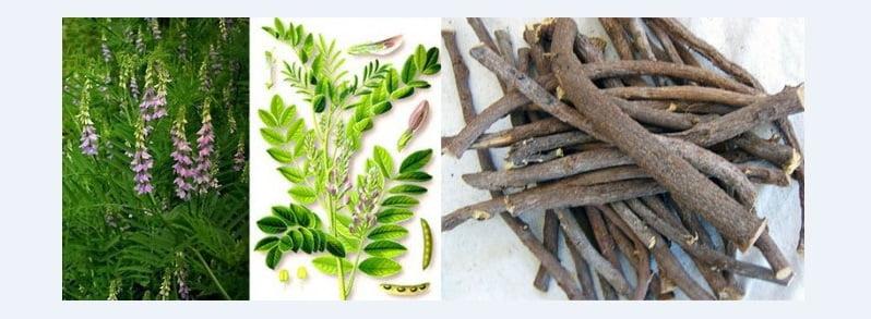 8-lemn-dulce-planta-radacina
