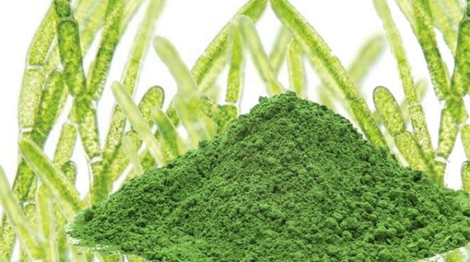 Alga chlorella are proprietăți nutritive, detoxifiante și antioxidante pentru organism, Foto: naturallifeenergy.com