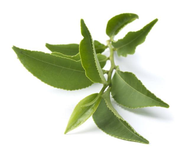 Ceaiul verde combate stresul, Foto: antistress-info.org