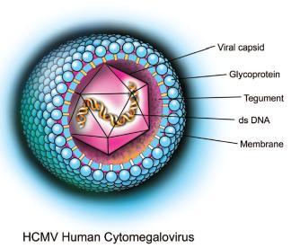Citomegalovirus, Foto: drmhanna.com