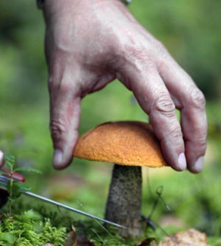 Ciuperci comestibile sau otrăvitoare, Foto: bymedia.by