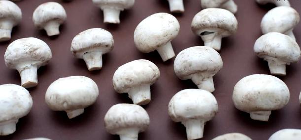Ciupercile conțin vitamina B5