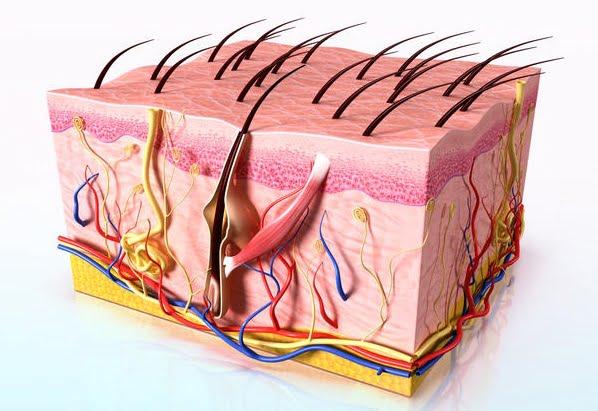 Dermatita seboreică, Foto: imagefriend.com