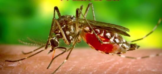 Febra galbenă, virusul amaril este transmis prin înțepătura țânțarilor contaminați