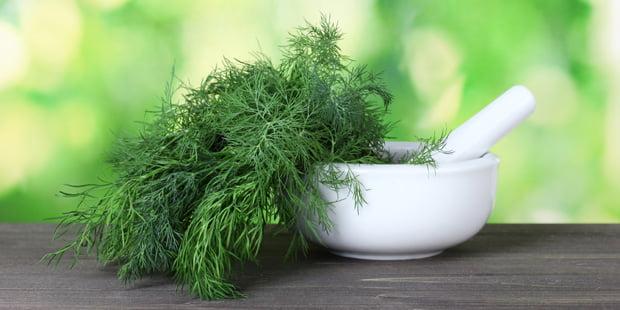 Mărarul este folosit în cosmetică, Foto: praxisvita.de