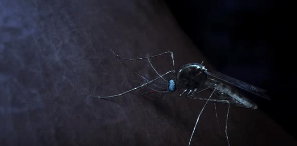 Malaria se transmite prin înțepătura țânțarilor
