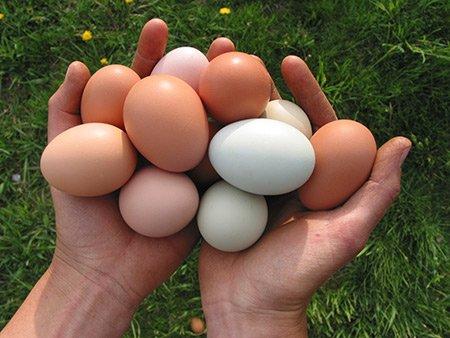 Ouăle au substanțe nutritive, Foto: cornucopia.org