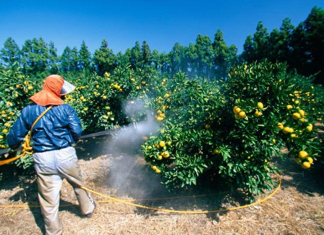 Pesticide, Foto: geo.fr