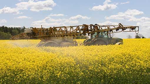 Pesticide folosite împotriva dăunătorilor din culturile de cereale, Foto: fwi.co.uk
