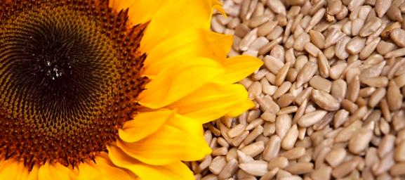 Semințele de floarea-soarelui sunt bogate în vitamina B5