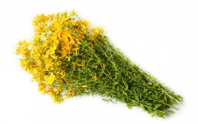 Sunătoarea, plantă medicinală, Foto: queen-plus.com