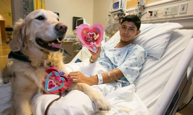 Terapia cu câini în spitale, Foto: galleryhip.com