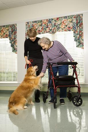 Terapia cu câini pentru pacienții cu dizabilități, Foto: galleryhip.com