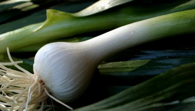Usturoi verde, Foto: wnyc.org