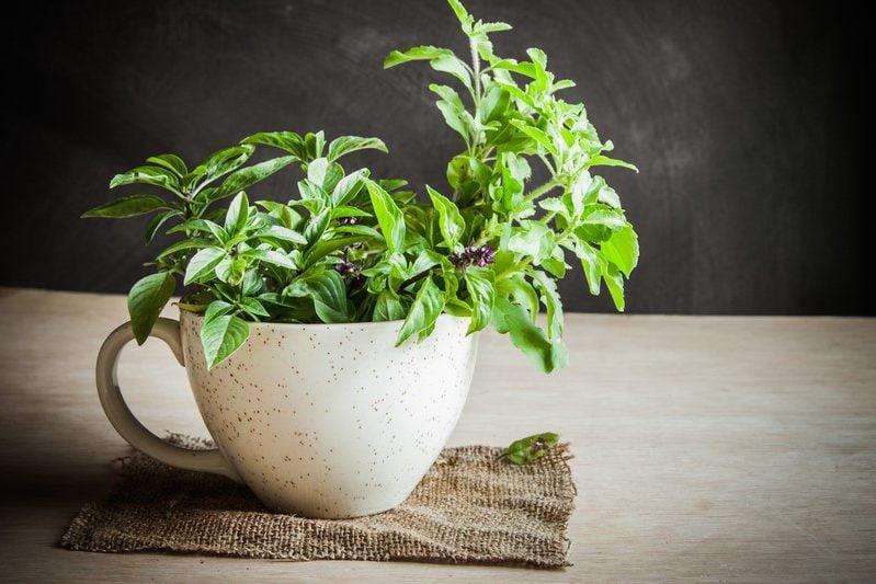 7-ceai-din-frunze-de-tulsi