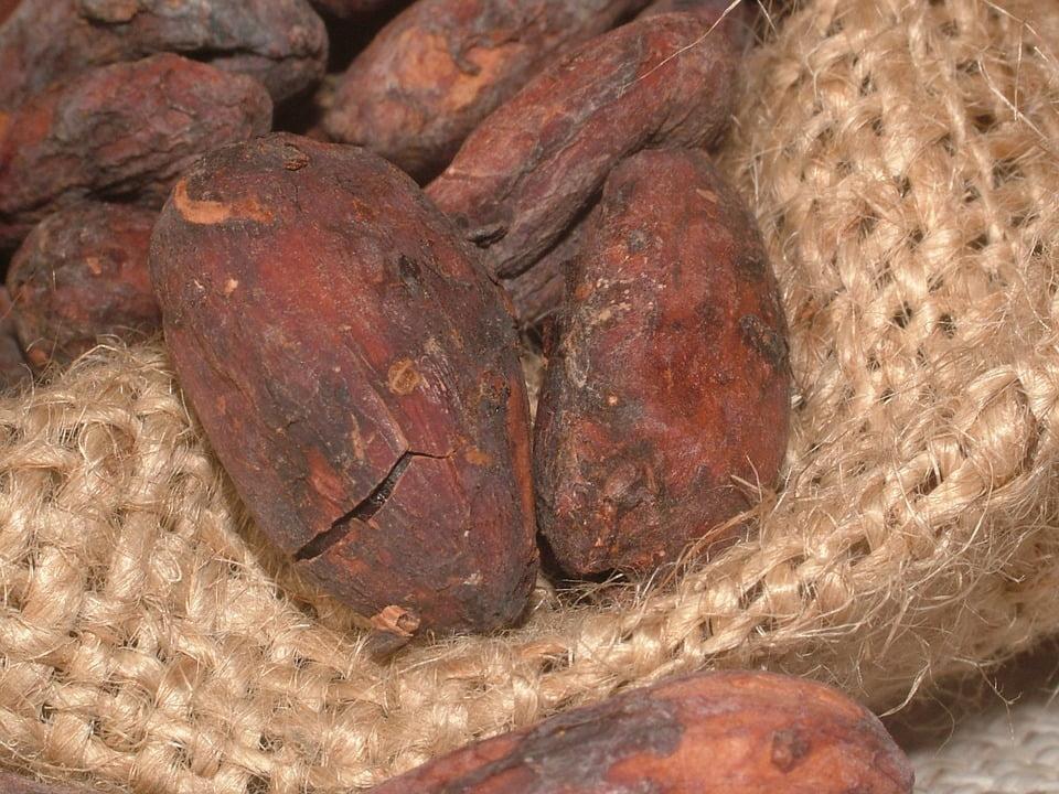 2-boabe-de-cacao-bio