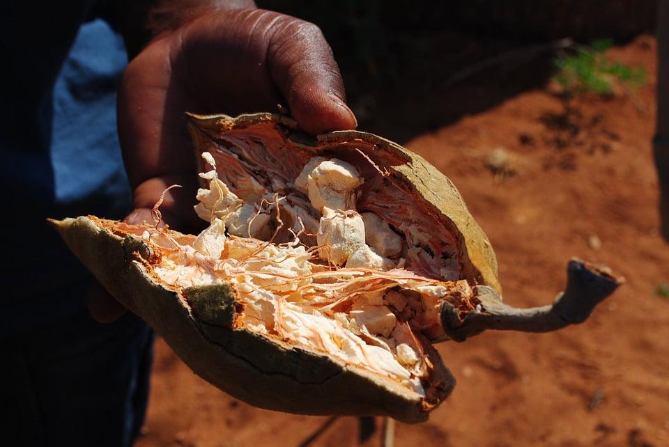 9-fruct-baobab