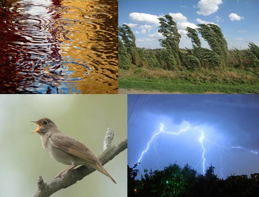 Sunete din natură, Foto: 900igr.net