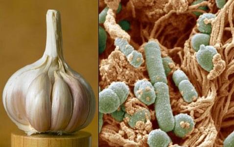 Usturoiul are proprietăți antibacteriene