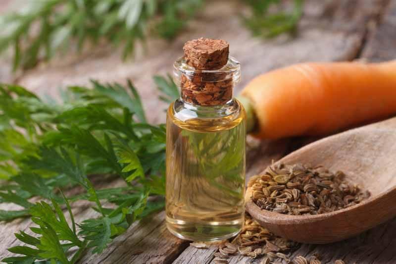 Ulei esențial de morcov, Foto: essentialoilsanctuary.com